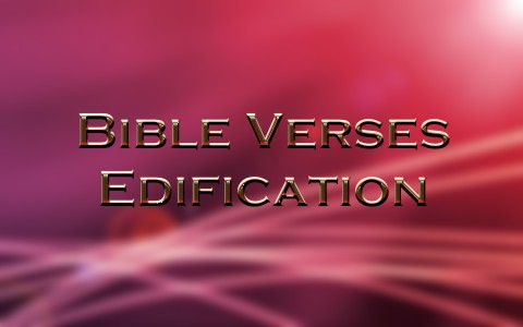 Top 8 Bible Verses About Edification